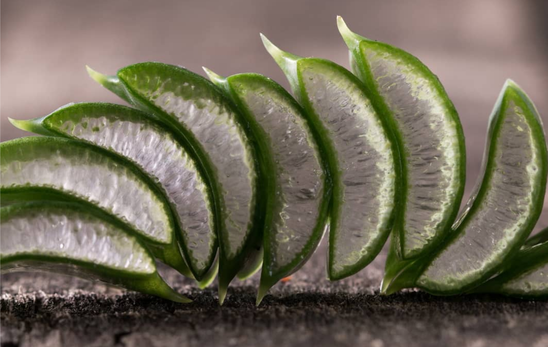 The Benefits of Aloe Vera in Moisturizer
